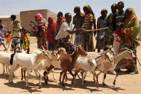 Agriculture support 'critical' for Horn of Africa as