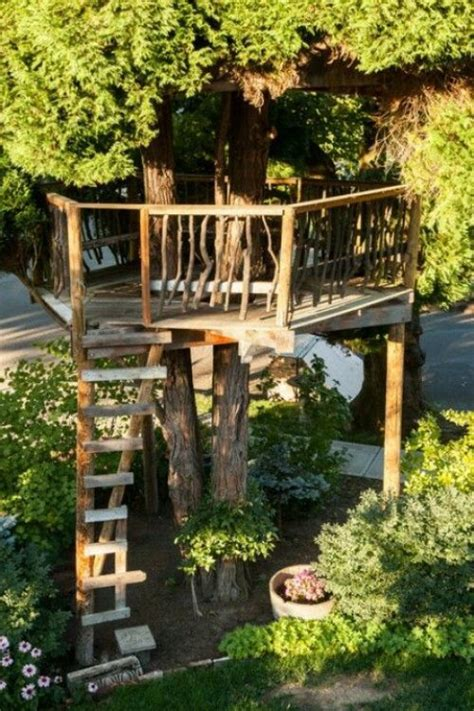 Ever Dream of A Quiet Place in A Tree House