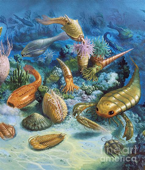 Underwater Life During The Paleozoic by Publiphoto