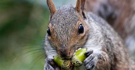 New York Hunter Likely Died From Eating Squirrel Brains